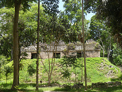 Temple in the jungles of Tikal